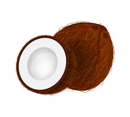 coconut brown fruit and half cut isolated on white background, illustration coconut brown half slice for clip art, coconut simple for icon