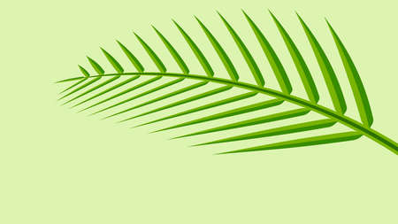 coconut leaf simple isolated on green pastel soft color, illustration of coconut leaves, palm stalk lush, leaf coconut green fresh