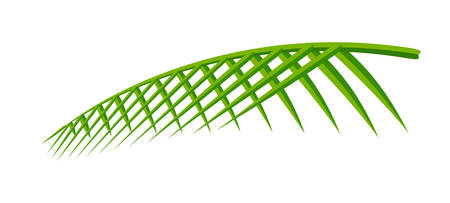 coconut leaf simple isolated on white background, illustration of coconut leaves, palm stalk lush, leaf coconut green fresh