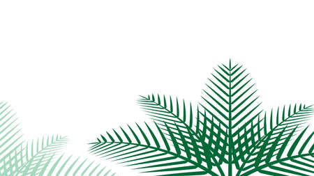 coconut leaf simple for background, illustration of coconut leaves, palm stalk and copy space and isolated on white, leaf coconut green soft for wallpaper