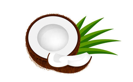 coconut half slice on leaf green, coconut brown fruit half cut isolated on white, illustration coconut half slice for clip art, coconut freshness fruit simple for icon