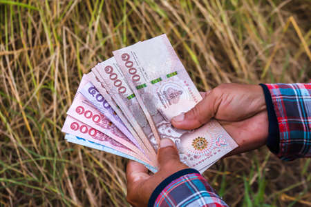 hands farmer are holding thai banknote in rice field, money thai baht in hand farmer, hand are holding money banknote of thailand, rice trading or selling concept in harvest season of rice production Banque d'images