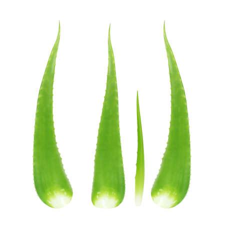 aloe vera stalk isolated on white, aloe vera leaf