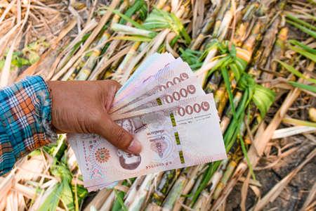 money in hand sugarcane farmers, banknote money thai baht in the hand at sugarcane plantation field in sugar cane harvest season