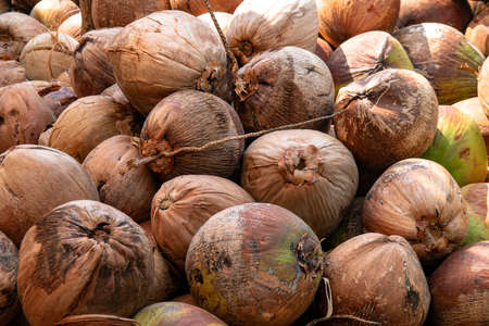 coconut, dried coconut brown, coconut fruit for background Stok Fotoğraf