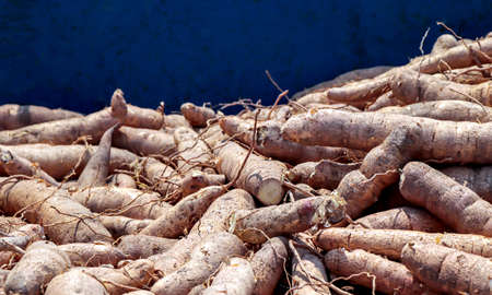 pile cassava in the pickup truck, cassava for tapioca flour industry, raw yucca tuber in front view