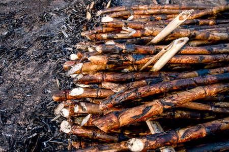pile sugarcane burned in the harvest season, sugar cane fresh, sugarcane burn in field, sugar cane burned in plantation Stok Fotoğraf