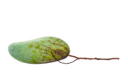 raw mango green, fresh mango and stalk branch, mango fruit single isolated on white Stok Fotoğraf