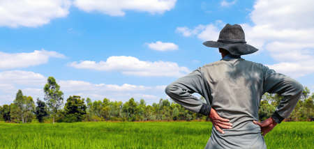 farmer standing back at rice field, farmers man looking sky horizon at rice plantation, labor rear back view, rural scenery background, worker with hands on waist standing and looking up