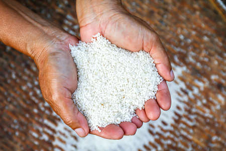 grain of rice in the hands farmer, rice white grain in handful, organic rice of asia Imagens