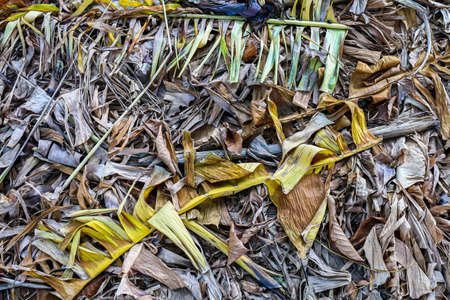 dried banana leaves on dirt for organic fertilizers