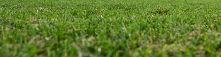 grass green for green meadow and grass scene background Stok Fotoğraf