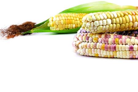 fresh corns, colorful corn, sweet corn, purple maize on white Stok Fotoğraf