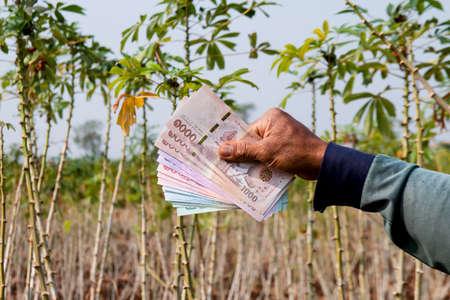 money in farmer hand at cassava plantation land, hand holding banknote thai baht, cassava or tapioca trading or selling concept 免版税图像