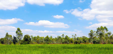 blurred rice field, sky horizon and rice plantation for rural scenery blur background