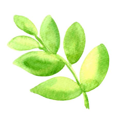 green leaf watercolor hand draw for kids art, illustration leaf clip art media, children hand draw concept