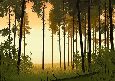 coniferous forest: Ilustración del paisaje de bosques de coníferas