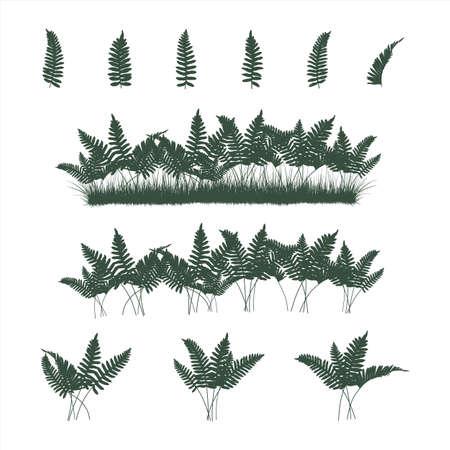 Set of ferns and grass
