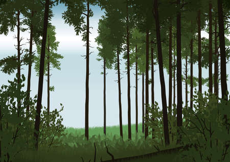coniferous forest: Illustration of coniferous forest landscape in flat colors