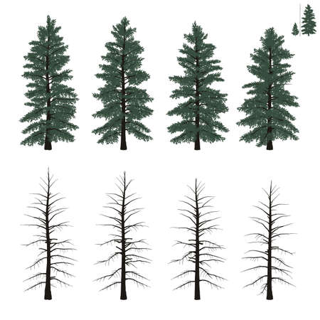 Set of mature firs trees in flat colors