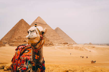 Panoramic view of the six great pyramids of Egypt with a camel in front. Pyramid of Khafre, pyramid of Khufu, and the red pyramid.