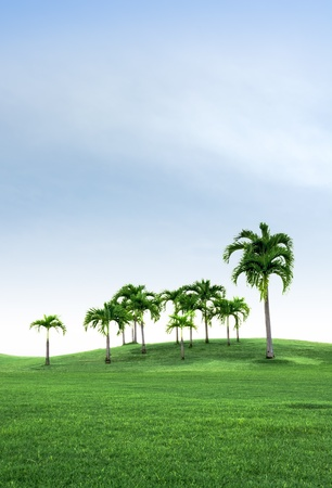 Group of Palm tree on the green Field and beautiful sky Stock Photo