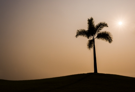Single Palm Tree Silhouette on the hill at the sunset.