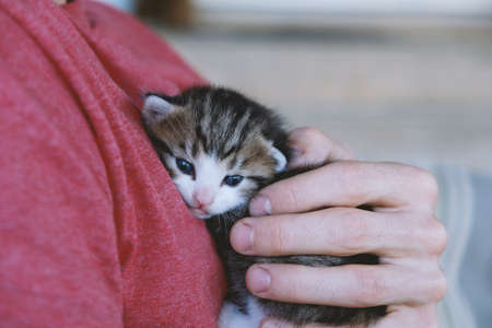Close up of baby kitten being held in hands by man.  Cute tiny animal in good care. 写真素材