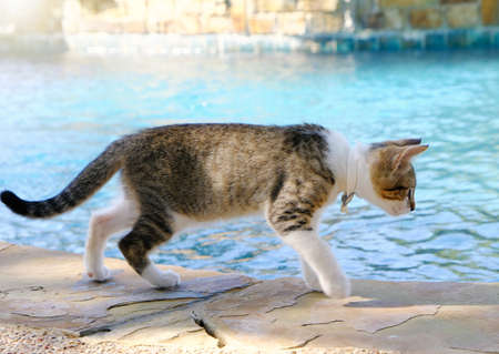 Pool in background of small kitten pet being curious. Stock Photo