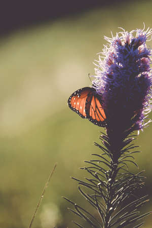 Close up of butterfly with wings on flower with blurred background in nature. Stock Photo