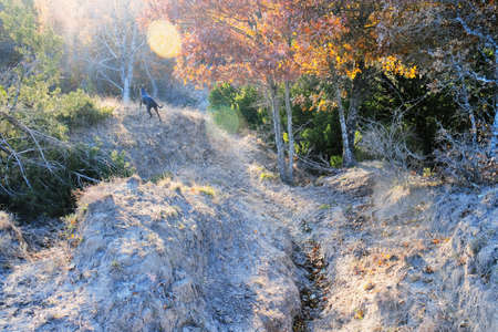 Dog standing on hill in Texas landscape with woods on steep hills.