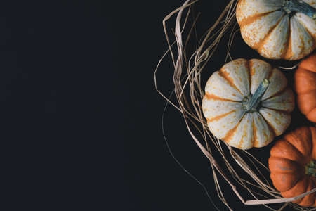 Fall season flat lay with copy space on black background, mini pumpkins view from above. Stock Photo