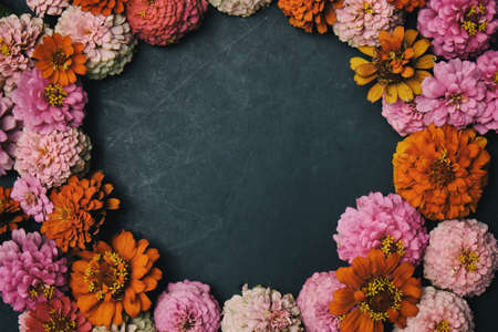 Zinnias lay in circle with copy space for mothers day or feminine graphic.
