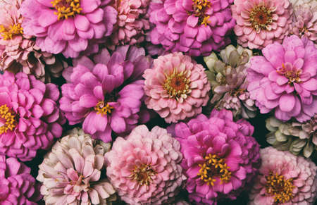 Zinnia flower heads make up background, pink floral arrangement.