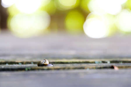 Snail with shell close up, blurred background.