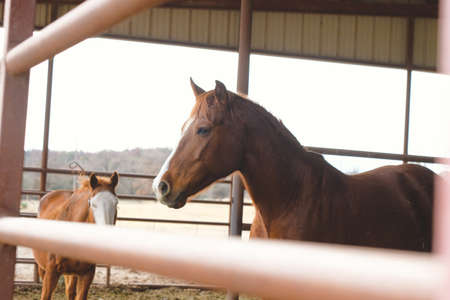 Mares in barn shows depth of field with fence in foreground and horses in background on farm.