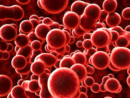celula animal: Red Blood Cells