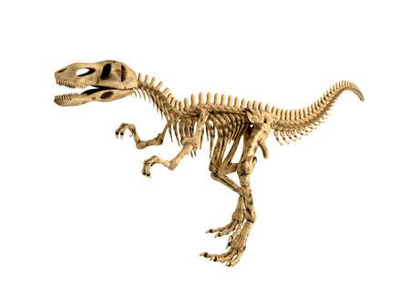 dinosauro: Skeleton T-Rex isolato