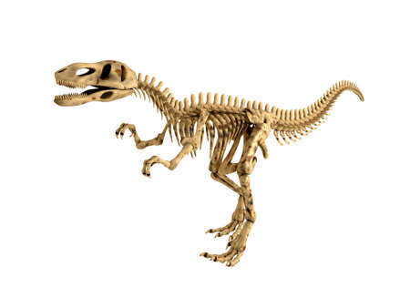 T-Rex Skeleton Isolated Stock Photo - 8138870