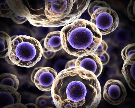 Cells in Mitosis purple Stock Photo - 9317536