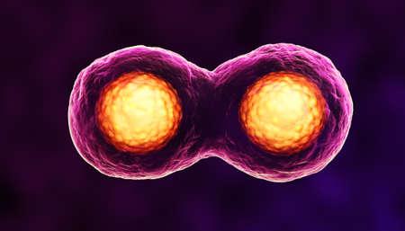 scheidingslijnen: Cellen in Mitose paars Stockfoto