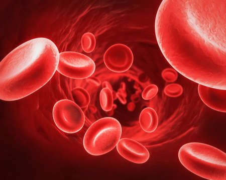 Red Blood Cells Stock Photo - 11371807