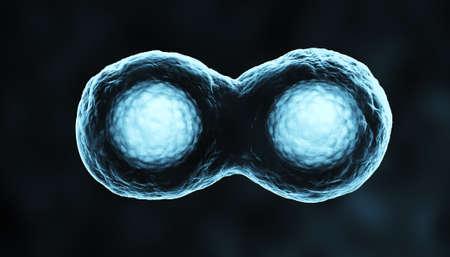 scheidingslijnen: Cellen in Mitose Blue