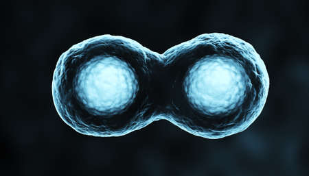 cytokinesis: Cells in Mitosis Blue Stock Photo