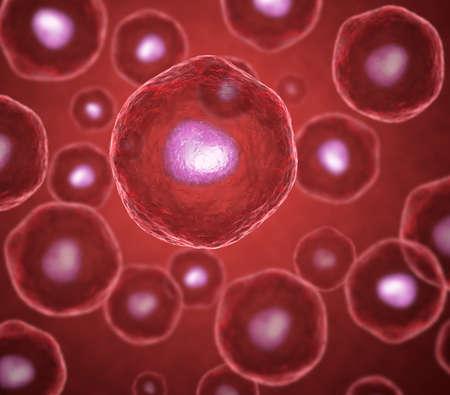 membrana cellulare: Ovociti in rosso Archivio Fotografico