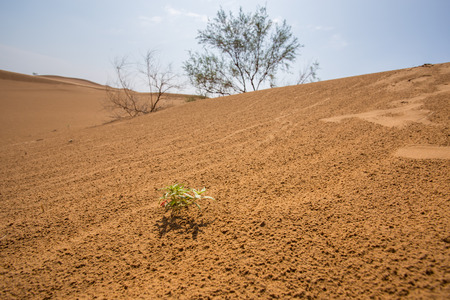loess: Desert with a green grass Stock Photo