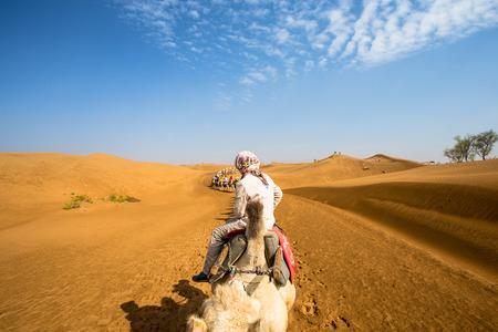 loess: Desert camels Stock Photo