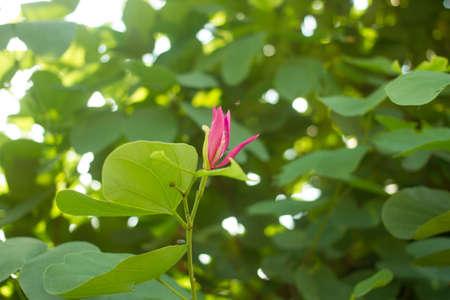 屋外の風景の熱帯の花 写真素材