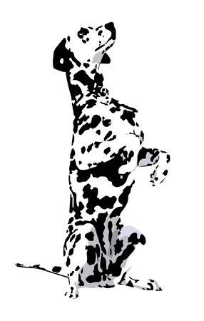 Dalmatian con la lana manchado sobre un fondo blanco Ilustración de vector
