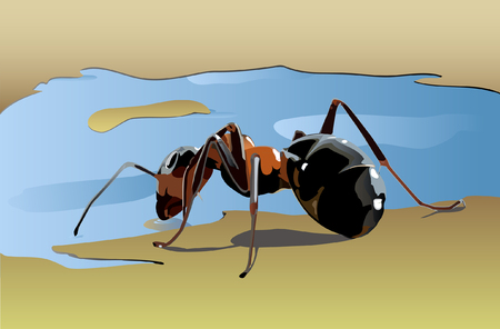 crawling creature: ant drinking water from a puddle